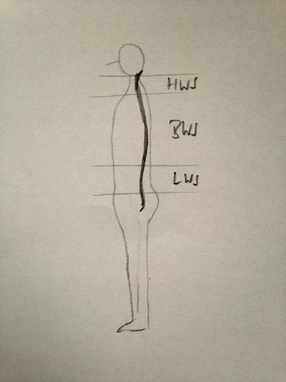Beschreibung der Abschnitte der Wirbelsäule und deren Kurven: Lordose der Halswirbelsäule HWS, Kyphose der Brustwirbelsäule BWS, Lordose der Lendenwirbelsäule LWS sowie Kypohse des Steißbeinbereichs